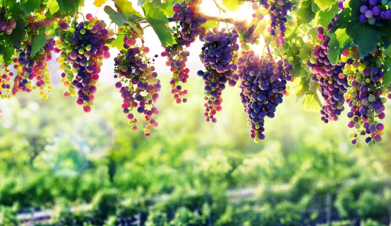 Walks for Wine Lovers: A guide to the best vineyard trails in Europe