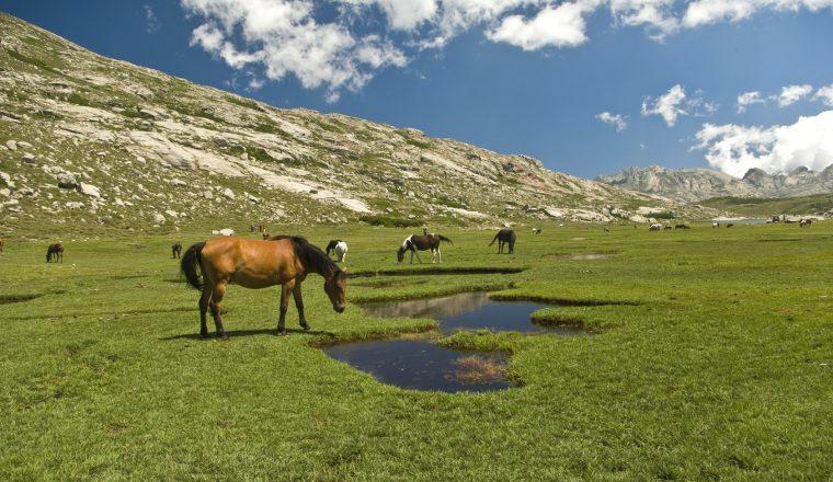 Corsica: cavalli al pascolo sul lago di Nino 6