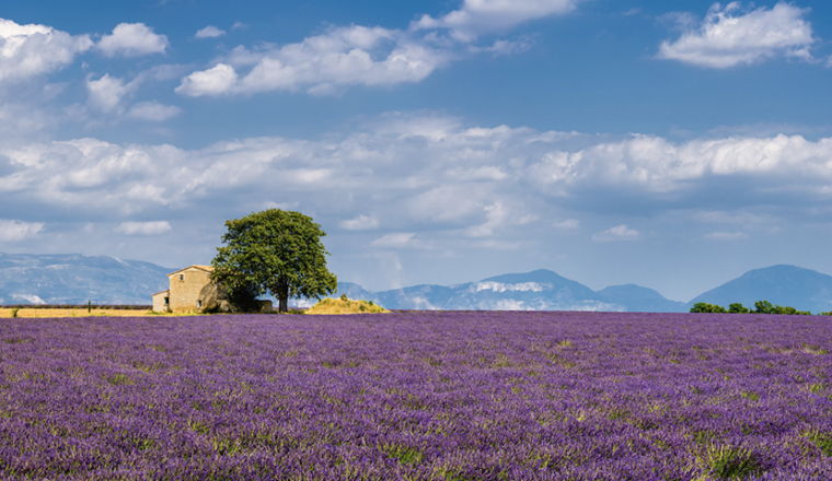 Step into Spring: The Top Spring Walks in Europe