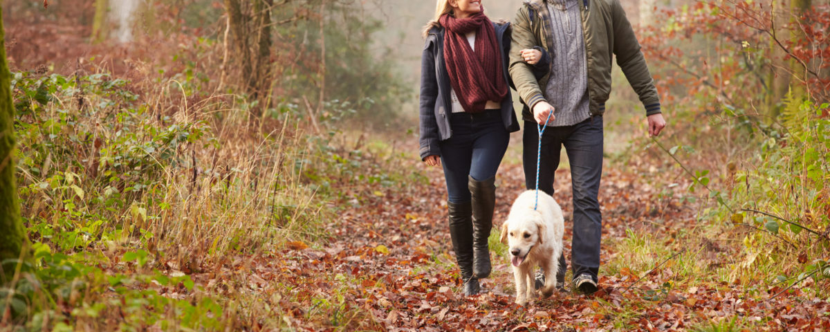 The Best Dog Walks in the Cotswolds