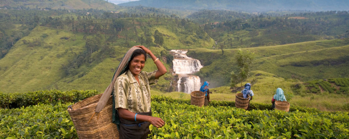 Why Sri Lanka is an Amazing Walking Holiday Destination