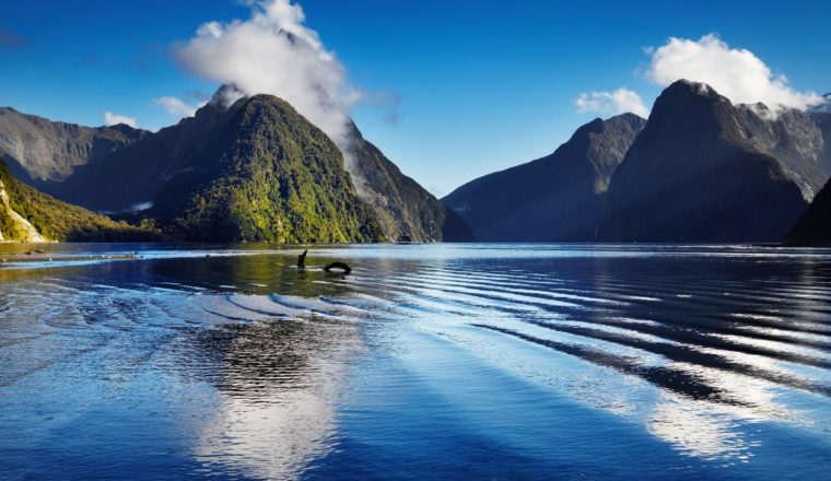 6 New Zealand Walks that are Simply Stunning