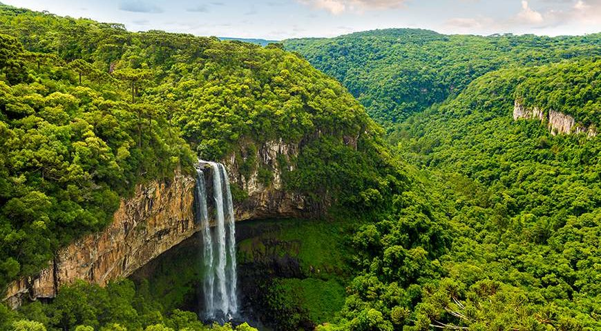 5 of the Best Jungle and Rainforest Walks on the Planet