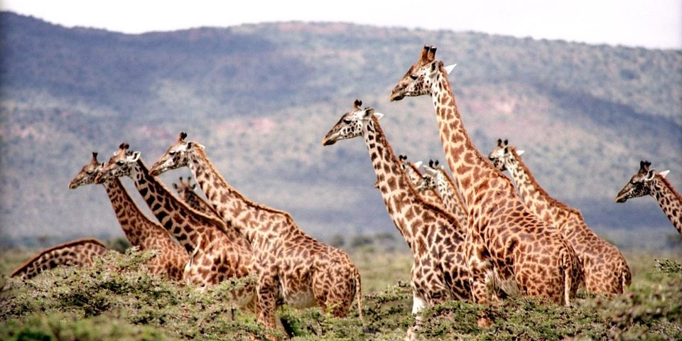 The Best Safari Destinations In Africa