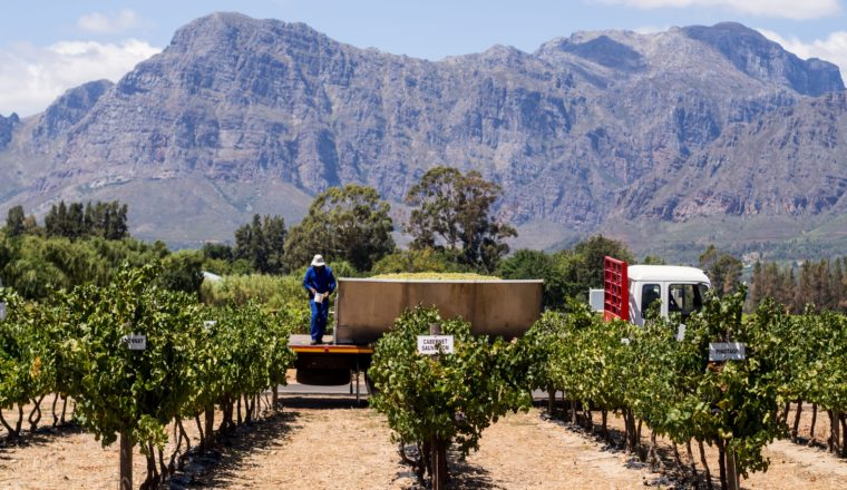 Cape Winelands Most Breathtaking Vineyards for Wine Tasting