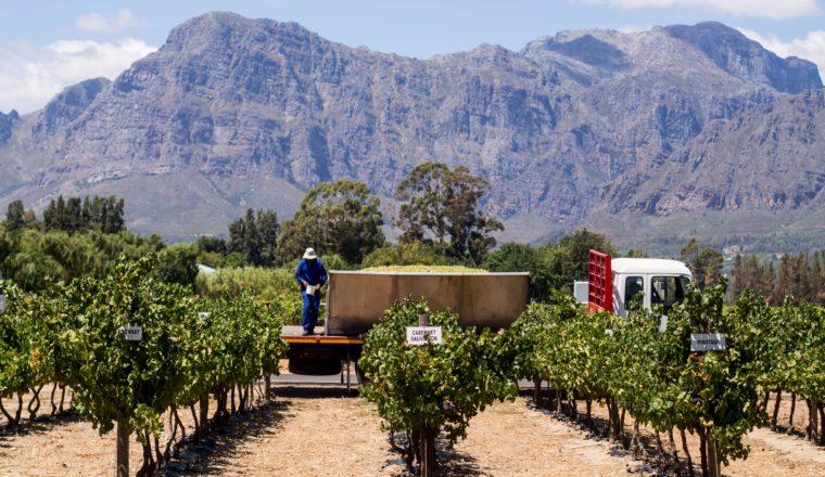 Cape Winelands Most Breathtaking Vineyards for Wine Tasting